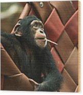 Cheeky Chimp Wood Print
