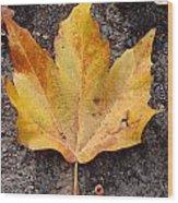 Cheerio Leaf Wood Print