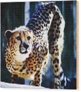 Cheeta Wood Print