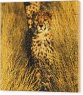 Cheetah Cubs Wood Print