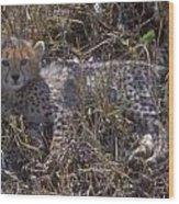 Cheetah Kitten Wood Print