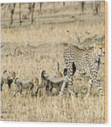 Cheetah Mother And Cubs Wood Print