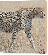 Cheetah Stepping Out Wood Print
