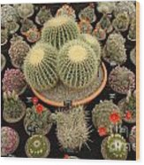Chelsea Flower Show Cacti Display Wood Print