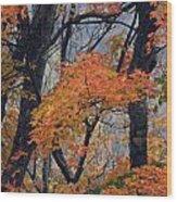 Cherohala Maple - D007676 Wood Print