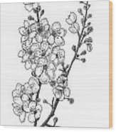Cherry Blossems Wood Print by Christy Beckwith
