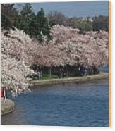 Cherry Blossom Festival, Jefferson Wood Print by Richard Nowitz