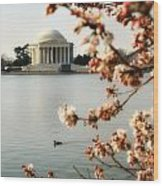 Cherry Blossom In Dc Wood Print