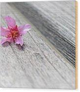 Cherry Blossom On Bench Wood Print