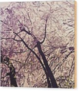 Cherry Blossoms - New York City Wood Print by Vivienne Gucwa