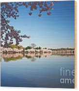 Cherry Blossoms Along The Tidal Basin Wood Print
