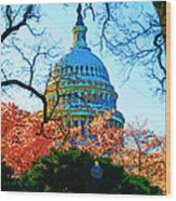 Cherry Blossoms And Capital Dome Wood Print