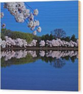 Cherry Blossoms And The Tidal Basin Wood Print