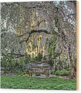 Cherry Blossoms At The Washington National Cathedral Wood Print
