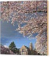 Cherry Blossoms At University Of Washington Wood Print