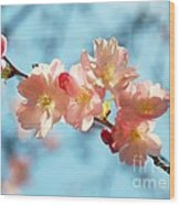 Cherry Blossoms IIi Wood Print