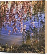Cherry Blossoms In The Sun - New York City Wood Print by Vivienne Gucwa