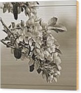 Cherry Blossoms Sepia Wood Print