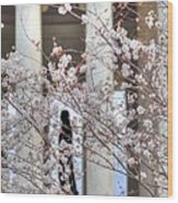 Cherry Blossoms Washington Dc 1 Wood Print