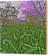 Cherry Orchard After The Storm Wood Print