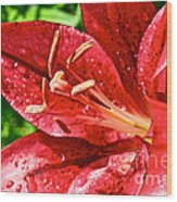 Cherry Red Lily Wood Print