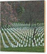 Cherry Trees Among The Fallen Wood Print