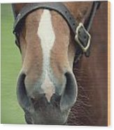Chestnut Pony Foal Muzzle With Whiskers Wood Print
