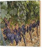 Chianti Grapes Wood Print