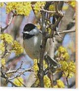 Chickadee Among The Blossoms Wood Print