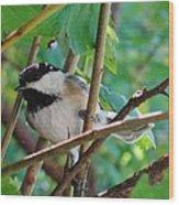 Chickadee Days Wood Print