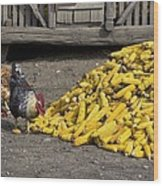Chickens Eating Corn Wood Print