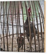 Chickens In Bamboo Cage Wood Print