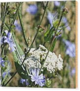Chicory And Lace Wood Print