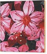 Chihuahua Flower Wood Print