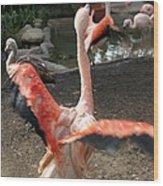 Chilean Flamingo Wood Print