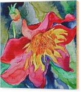 Chimborazo Wood Print