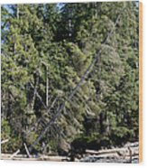 China Creek China Beach Juan De Fuca Provincial Park Bc Canada Wood Print by Andy Smy