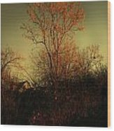 Chinaberry At Sunset Wood Print