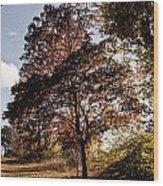 Chinbrook Meadows Wood Print