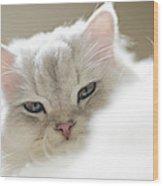 Chinchilla Cat Wood Print