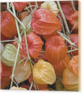 Chinese Lantern Flowers Wood Print