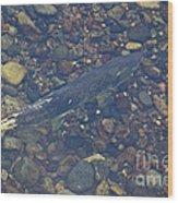 Chinook Salmon Wood Print