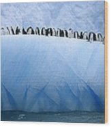 Chinstrap Penguins Lined Wood Print