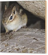 Chipmunk In Danger Wood Print
