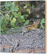Chipmunk On A Log Wood Print