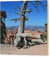 Chipmunk Tree Wood Print