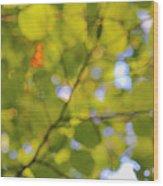 Chlorophyll Daydream Wood Print