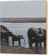 Chobe Elephants Wood Print