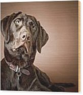 Chocolate Labrador Retriever Portrait Wood Print