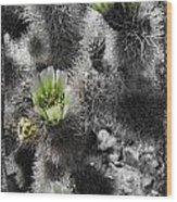 Cholla Blossoms Wood Print